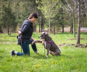 10- Give Paw Dog Training - DSC_1685 WEB